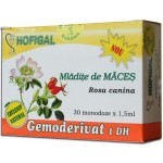 Mladite de Maces (30mon x 1.5ml) Hofigal