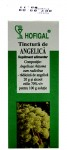 Tinctura de Angelica 50ml Hofigal